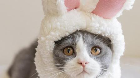 小猫多久断奶,猫咪的哺乳期一般为40天 不建议奶猫在40日龄以内断奶,你知道吗