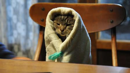 日本高分小众奇幻电影,为了一只猫,两万人落泪!