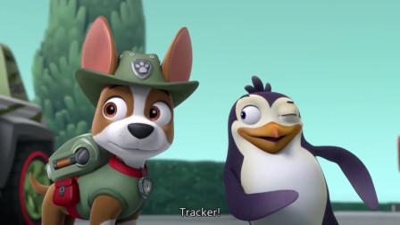 汪汪队:企鹅是不能吃蛋糕的,和阿宝船长一起走了。