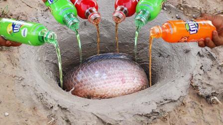 印度化学专家出门抓鱼,利用可乐性质,竟捕获一大堆肥美大鱼!