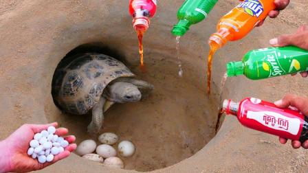 农民小哥利用可乐芬达,捕获千年老乌龟,小哥会将他放生吗?