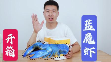 蓝魔虾开箱:买了3只不同颜色的鳌虾,怎么感觉上当了呢
