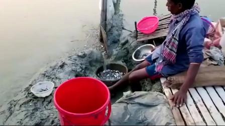自创的懒人捕鱼方式坐旁边等着鱼就会往陷阱里游去