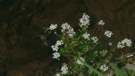 小森林:我有一所房子,位在深山,春暖花开