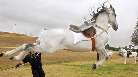 农场主用烙铁给马儿烙印,谁料马儿突然发难,一脚将大叔踢飞!