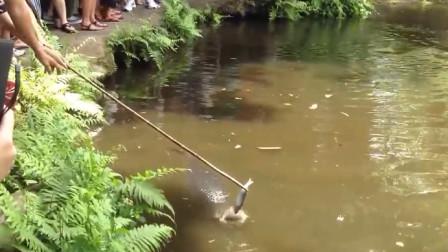 """小水塘里似有""""猛兽"""",村民拿小鱼试探,刚放水里鱼就没了!"""