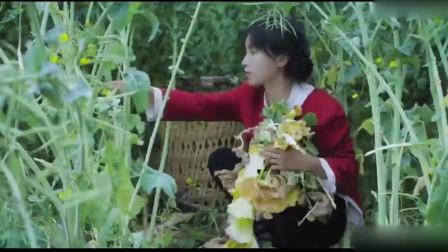 李子柒:最是难忘菜籽香,新榨的菜籽油做啥都好吃