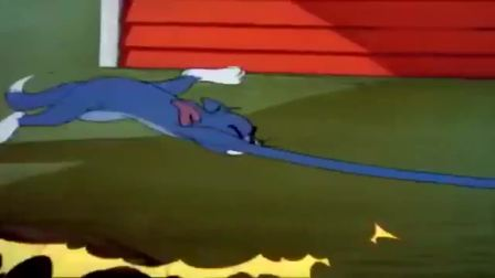 猫和老鼠:杰瑞不管三七二十一拖着汤姆就跑,汤姆被折磨坏了