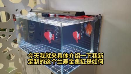 小伙自己设计订制的适合养兰寿金鱼的鱼缸,原来养兰寿真的适合用订制鱼缸
