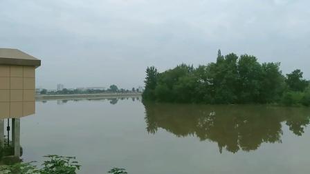 走进郎溪西门埂,近距离看看郎川大河水位。