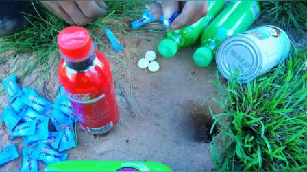 实验:可口可乐,芬达,雪碧,椰奶,薄荷,从地下洞穴捉蜥蜴
