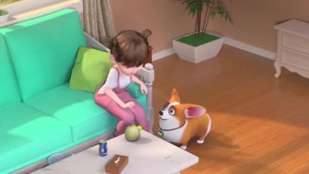 短腿小柯基:铲屎官这个开榴莲的方式是认真的吗?飞狗的狗头要不保了