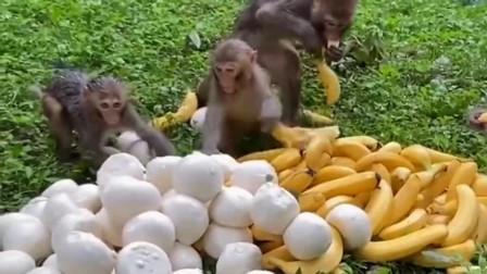这些猴子真是浪费食物,话说这馒头跟香蕉看起来还很可口的样子呢
