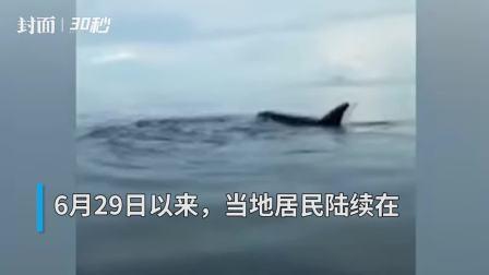 30秒丨菲律宾薄荷岛附近海域再次出现虎鲸