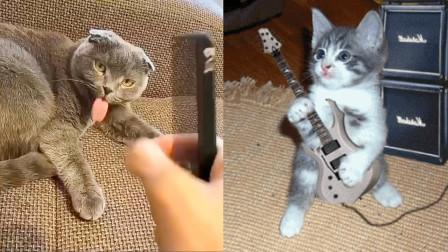 肥猫爬高上低,下一秒惨事发生!猫咪:主人,是笼子先动的手