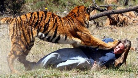 """老虎攻击饲养员,没想到饲养员仅用一招""""反杀"""",老虎可惨了"""