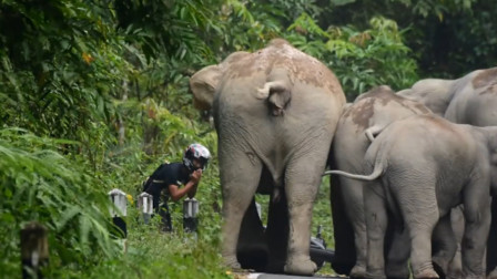 男子惹怒大象,被象群围住,接下来男子的做法让人意外!