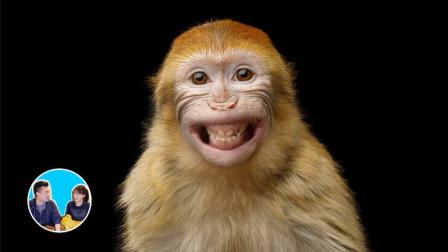 进化论可能是错的 关于人类的由来和进化论的进化