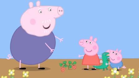 佩奇和乔治在猪爷爷的花园种出了大大的草莓,大家也想吃吗?