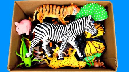 趣味早教剧场:超益智!动物世界里你最喜欢哪一只动物呢?