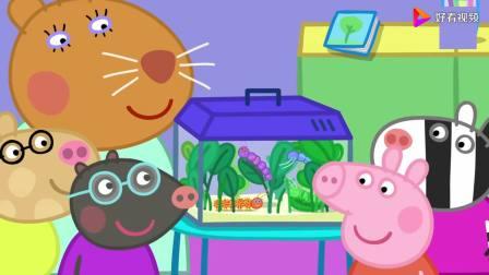 最新第八季小猪佩奇观察宠物医生带来的毛毛虫 简笔画