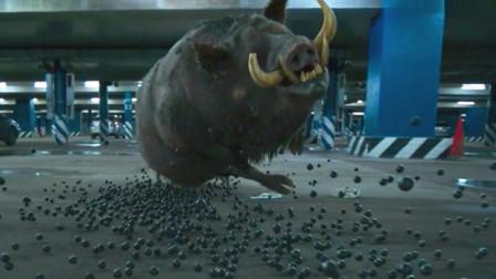 多少人因为片名而错过了一部好电影 生猛的猎杀妖猪场面极致刺激!