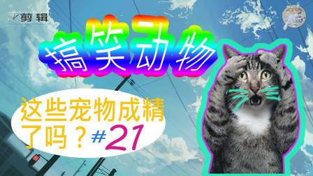 """搞笑动物,""""这些宠物成精了吗?""""逗笑剪辑#21"""