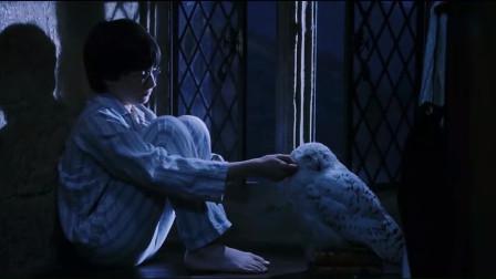 哈利·波特:小哈利独自望着海边,我想他应该是想自己父母了吧