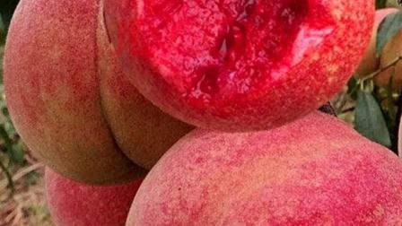 这么好吃的桃子,喜欢吃水果的朋友,点个红心支持下吧