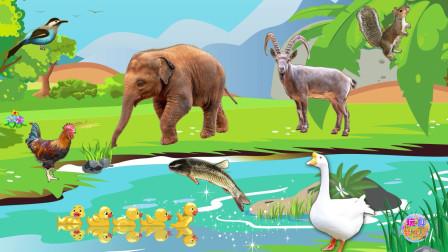 快看河边的小动物它们在做什么 认识动物大象、鸭等
