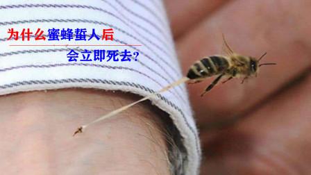 """""""以命相搏""""实力派的蜜蜂,为什么在蛰完人后会立马死去?"""
