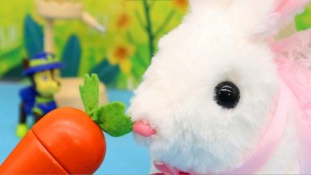 阿奇的宠物兔,智能养成小兔子