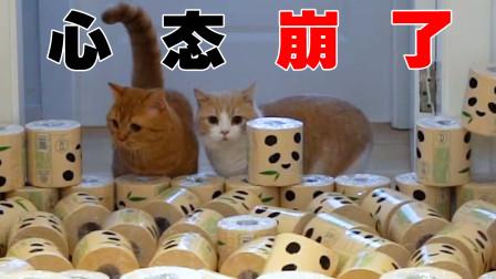 当猫遇上卷筒纸,这主人太会玩了!猫:我心态崩了