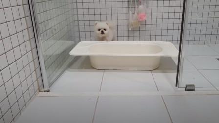 """自己洗澡的""""博美犬"""",场面可爱搞笑,网友:它成功俘获了我的心"""