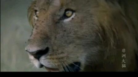 诺迟联盟纪录片:非洲大猫