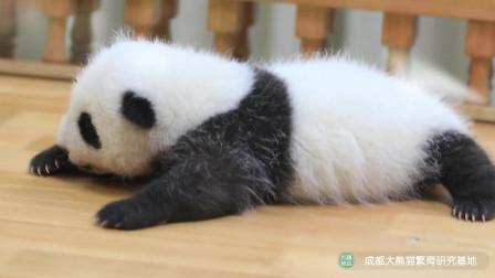 """熊猫:来自2020级小团子""""热干面""""和""""蛋烘糕""""的美味生活"""
