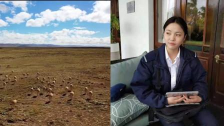 美女大学生青海旅游失联18天 曾单人赴可可西里 最新回应!