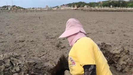妹子在滩涂挖出巨无霸,光洞口就挖好几米,拿铁铲去探还有乓乓声!