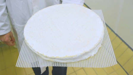 布里奶酪是这样生产的?一个个的宛如煎饼,发霉后更诱人!