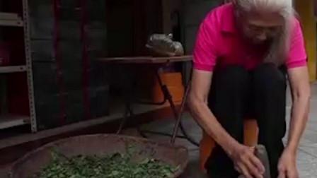 食来运转白医生有多年的经验看见花花草草都知道其药用价值