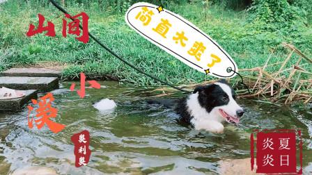 主人带着狗狗去戏水,这场景让人哭笑不得,真不愧狗界第一狗