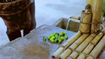 李子柒在院子里采摘金桔,桑葚,干花,晒干后泡制一碗花茶,想想救美!