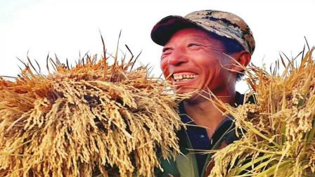 """二十年如一日的小麦,迎来""""高光时刻""""?麦农:1块5的春天来了"""