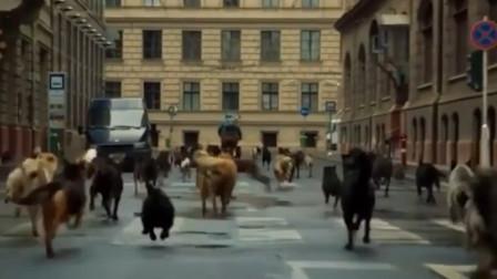 """""""狗王""""报复人类,带领200只流浪狗见人就咬,谁料意外遇见主人"""