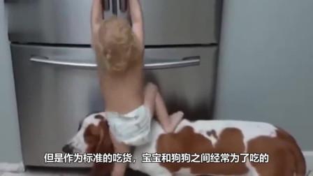 主人放一块饼干在狗狗和宝宝眼前,下一秒它们的反馈憋住不要笑