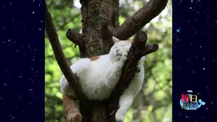 当对象是猫的时候,女生可以有多主动?