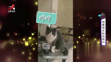 家庭幽默录像:喝了点主人的水,主人就往它的水里吐口水,喵喵:这铲屎的忒小气