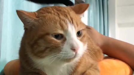 萌宠:猫咪欢乐多又多,即便它俩品种不同!