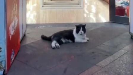 萌宠:养了只自来熟的猫是一种怎样的体验?吹百家空调长大的!