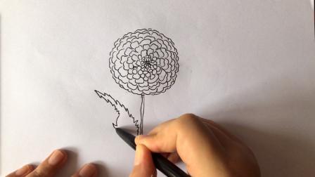 【速写】花朵手绘分享,第一天;第二弹。【关注我,了解更多手绘】